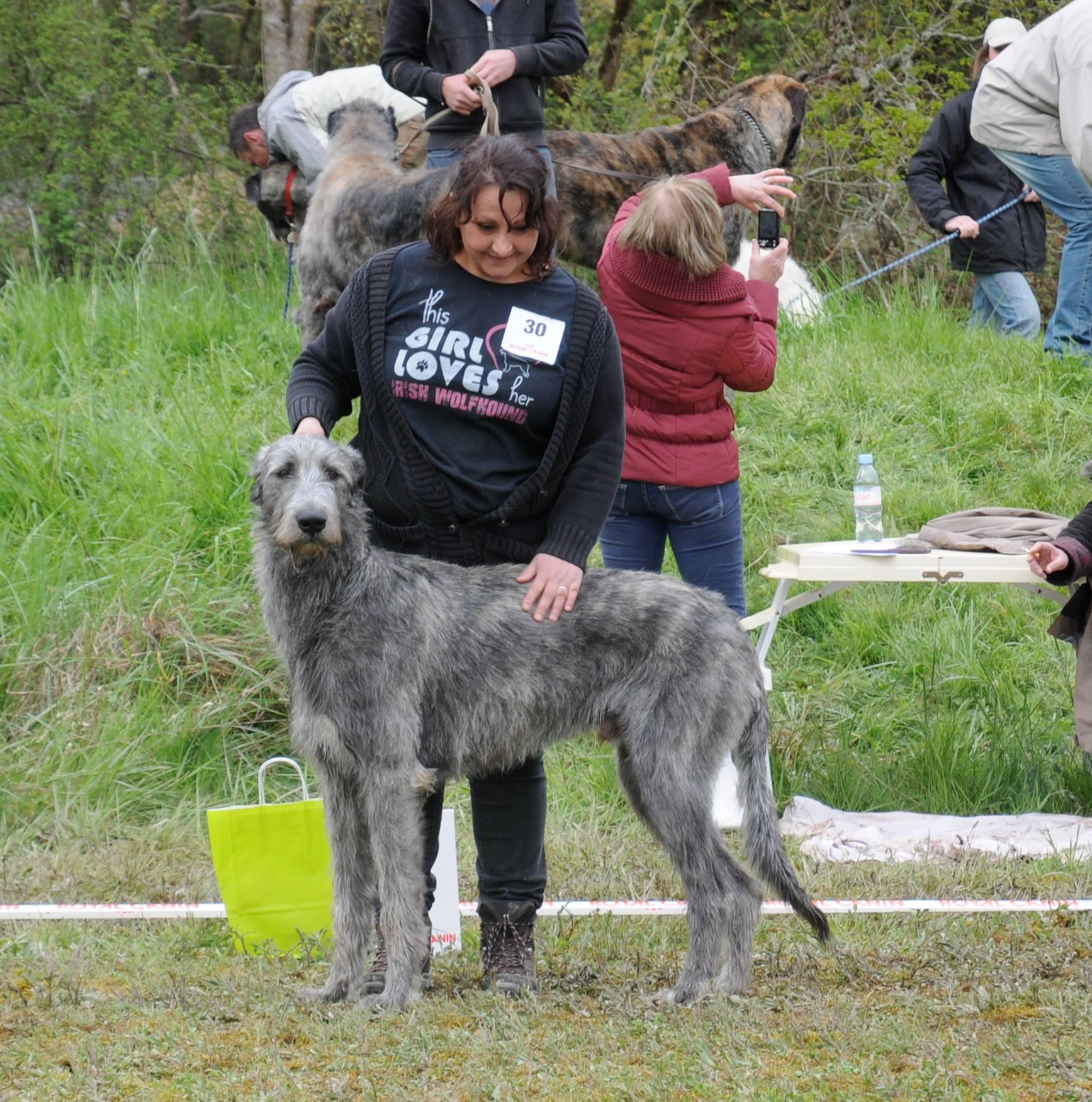 centrale canine rouen