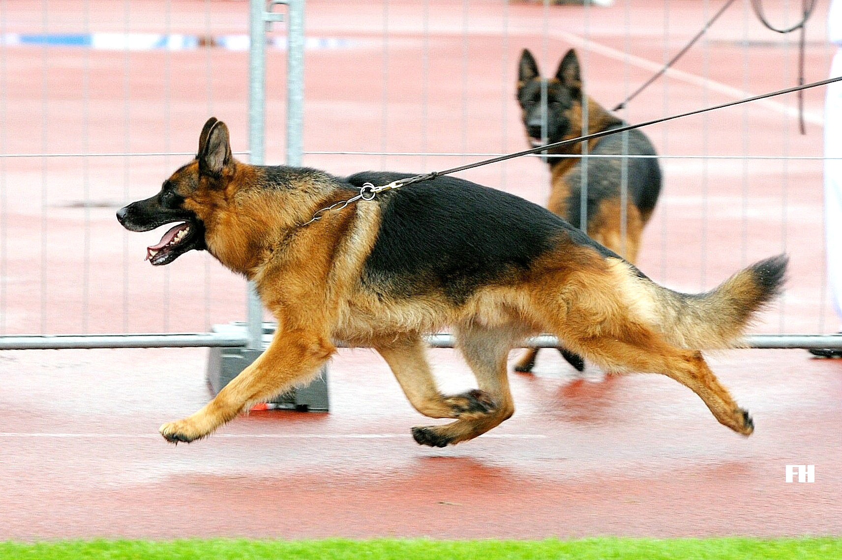 centrale canine berger allemand