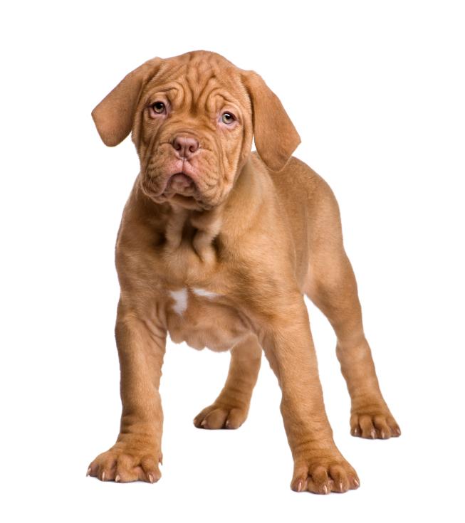 centrale canine bordeaux