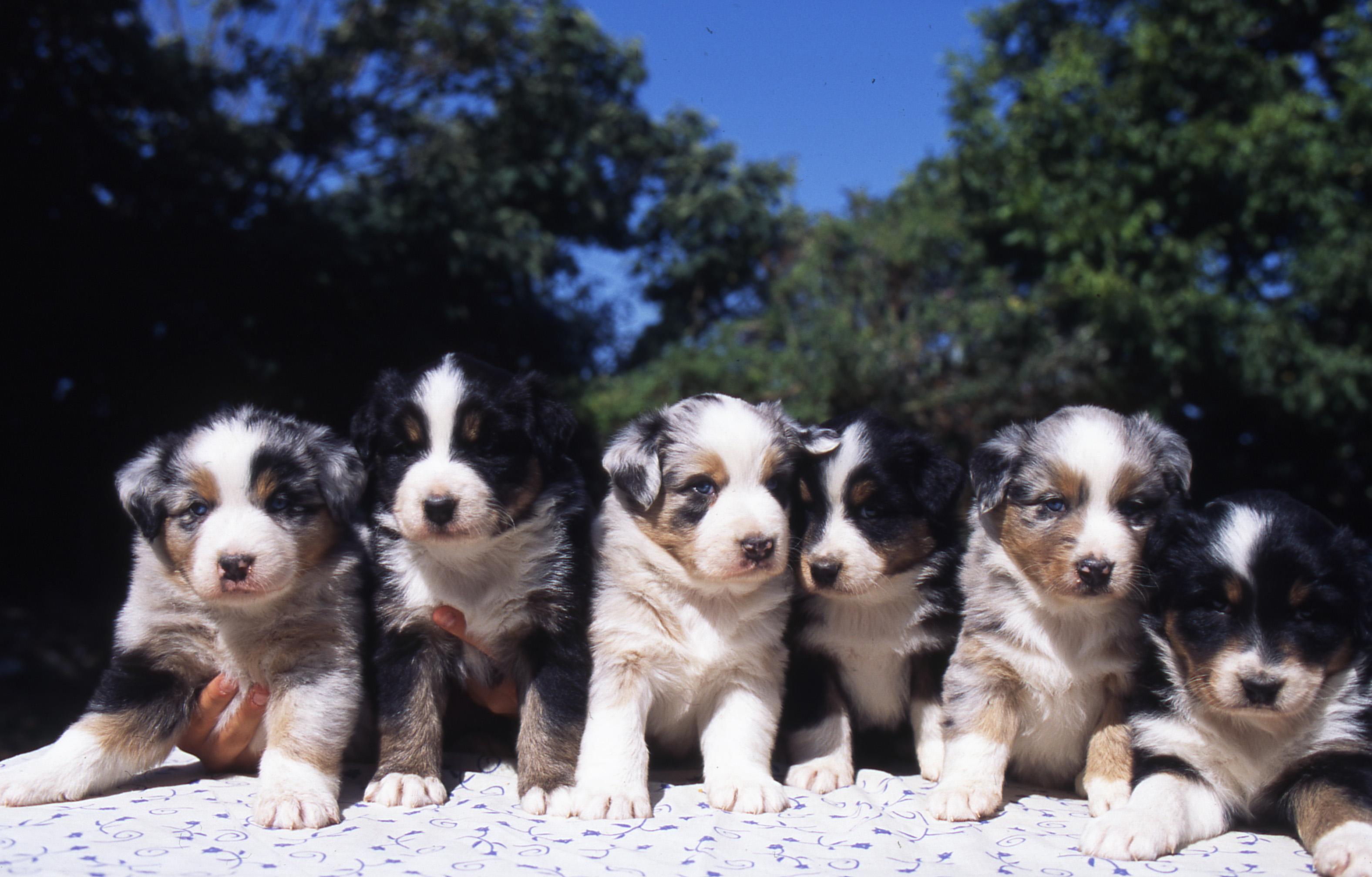 centrale canine prenom