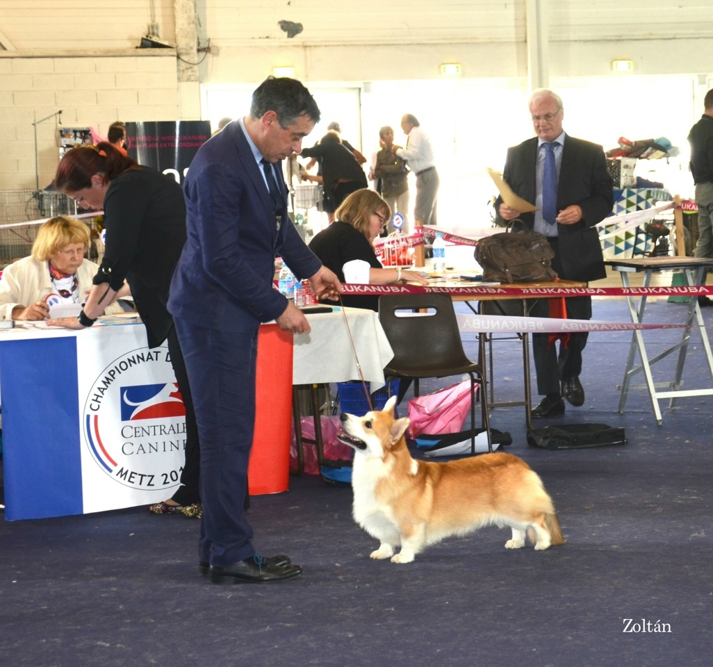 centrale canine perigueux