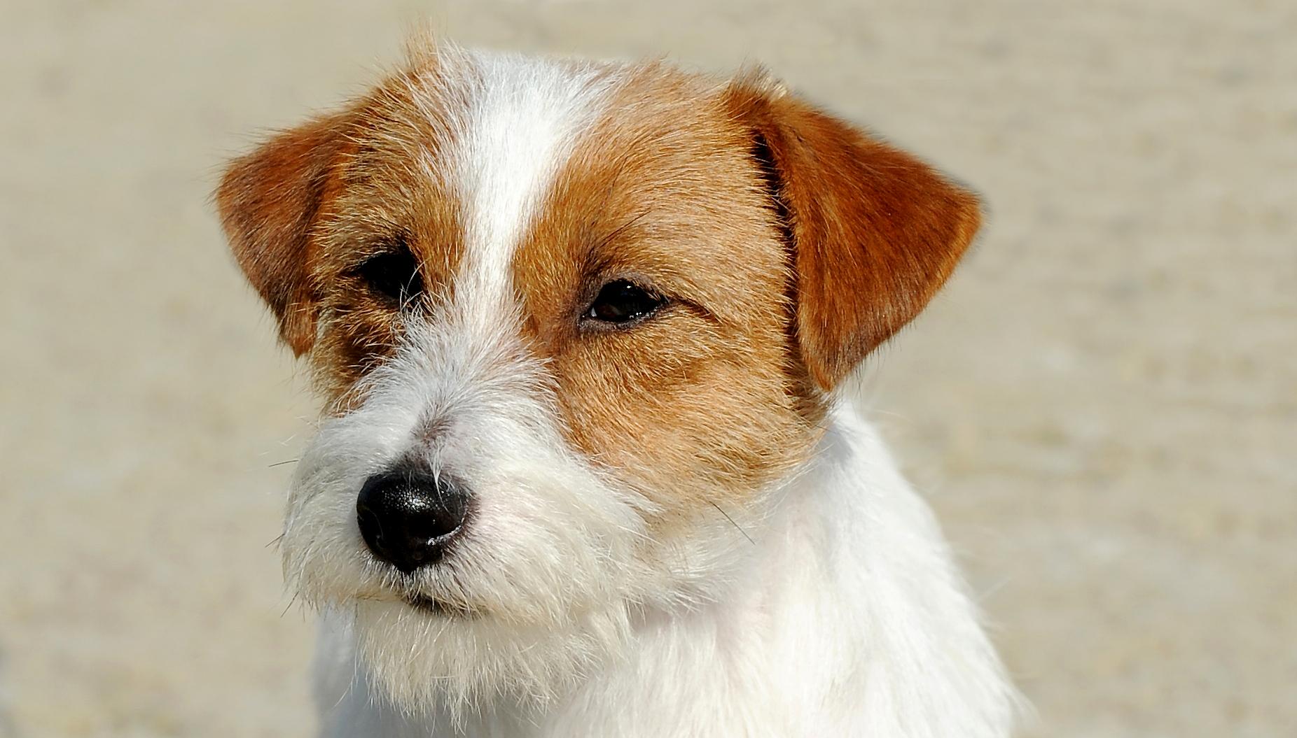 L Adoption D Un Chiot Age De Plusieurs Mois Societe Centrale Canine