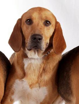 Trouver Un Chiot Societe Centrale Canine