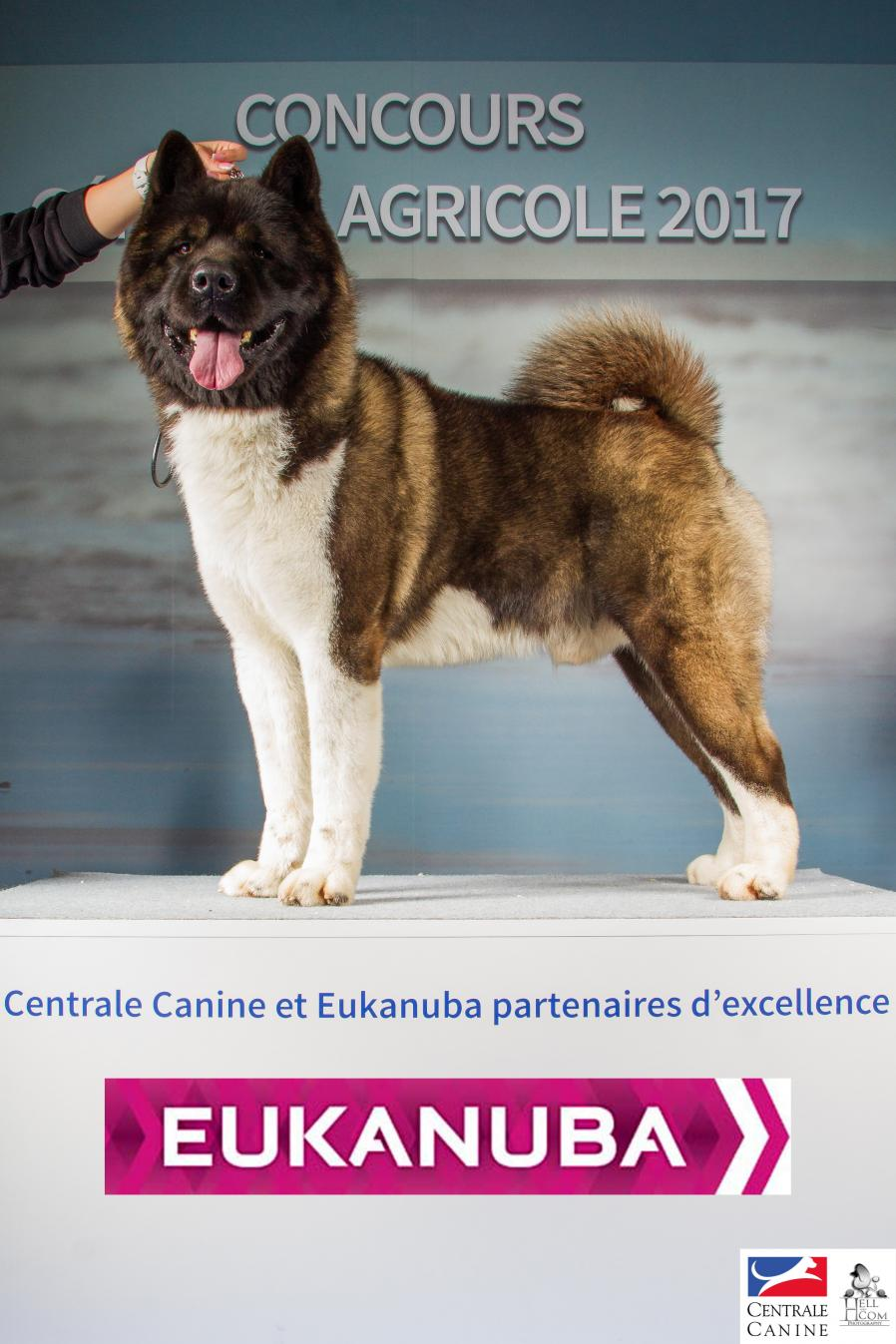 centrale canine mulhouse