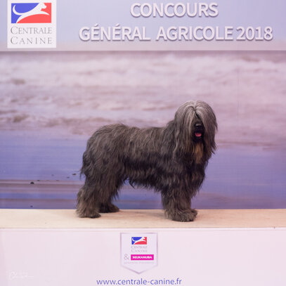 centrale canine indre et loire